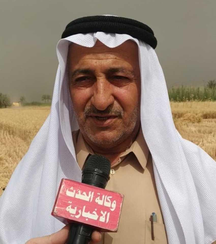 صنف جديد من محصول الحنطة يتم زراعته لاول مره في العراق