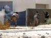ليبيا.. مجموعة مسلحة تهاجم مقر حكومة السراج وتنسحب