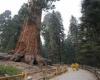 حرائق كاليفورنيا تهدد بتدمير أشجار تاريخية