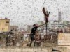 بعد تحركات على الحدود.. العراق يجهز دفاعاته لصد خطر يأكل الأخضر واليابس