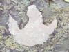 """العاصفة سيارا تكشف عن """"بصمة"""" ديناصور عمرها 130 مليون عام"""
